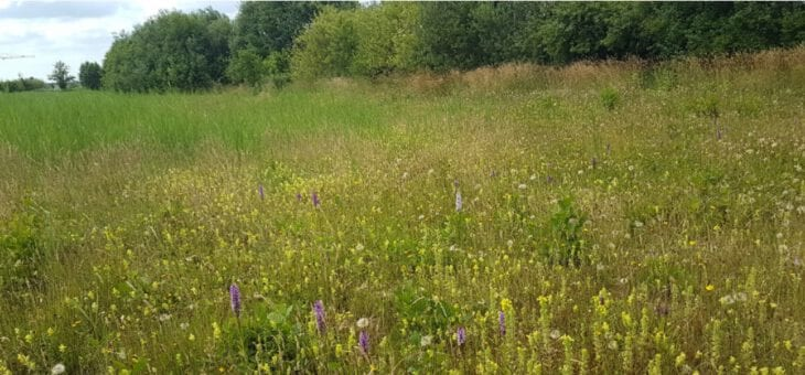 Spectaculaire toename van blauwgrasland plantensoorten in De Groene Grens