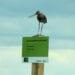 Monitoring vogels 2020