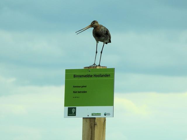 dinsdag 16 maart  20.00 uur:     Lezing over Broedvogelinventarisatie van de Binnenveldse Hooilanden