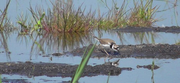 Eerste broedvogelinventarisatie van de Binnenveldse Hooilanden