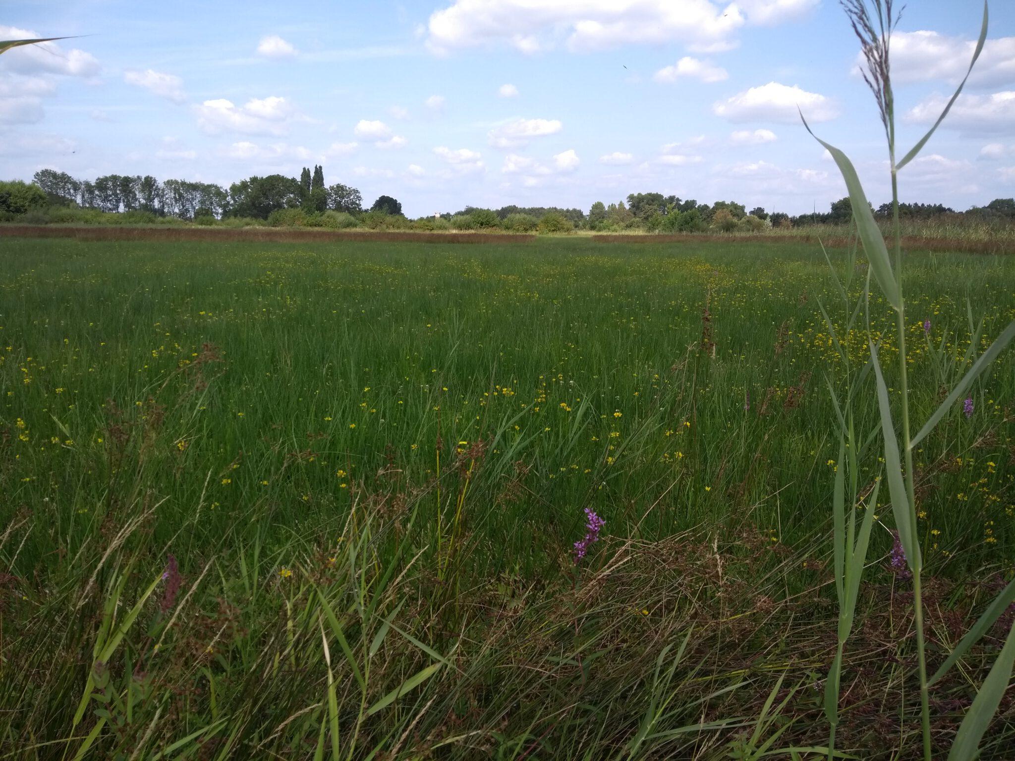 Groene Grens: 'nu al één van de natuurparels van Gelderland'