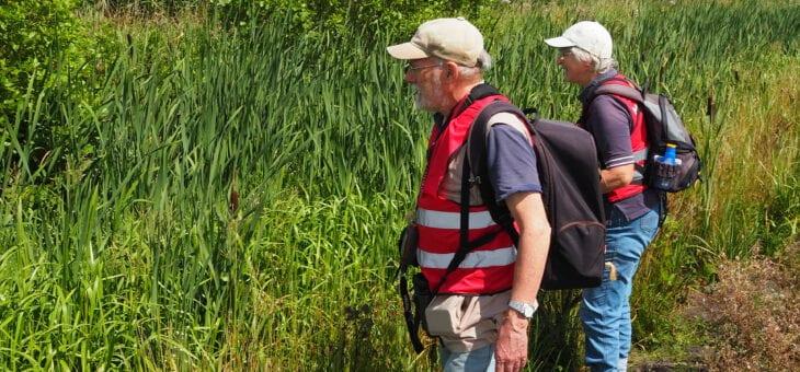 Hoopvolle eerste resultaten monitoring libellen
