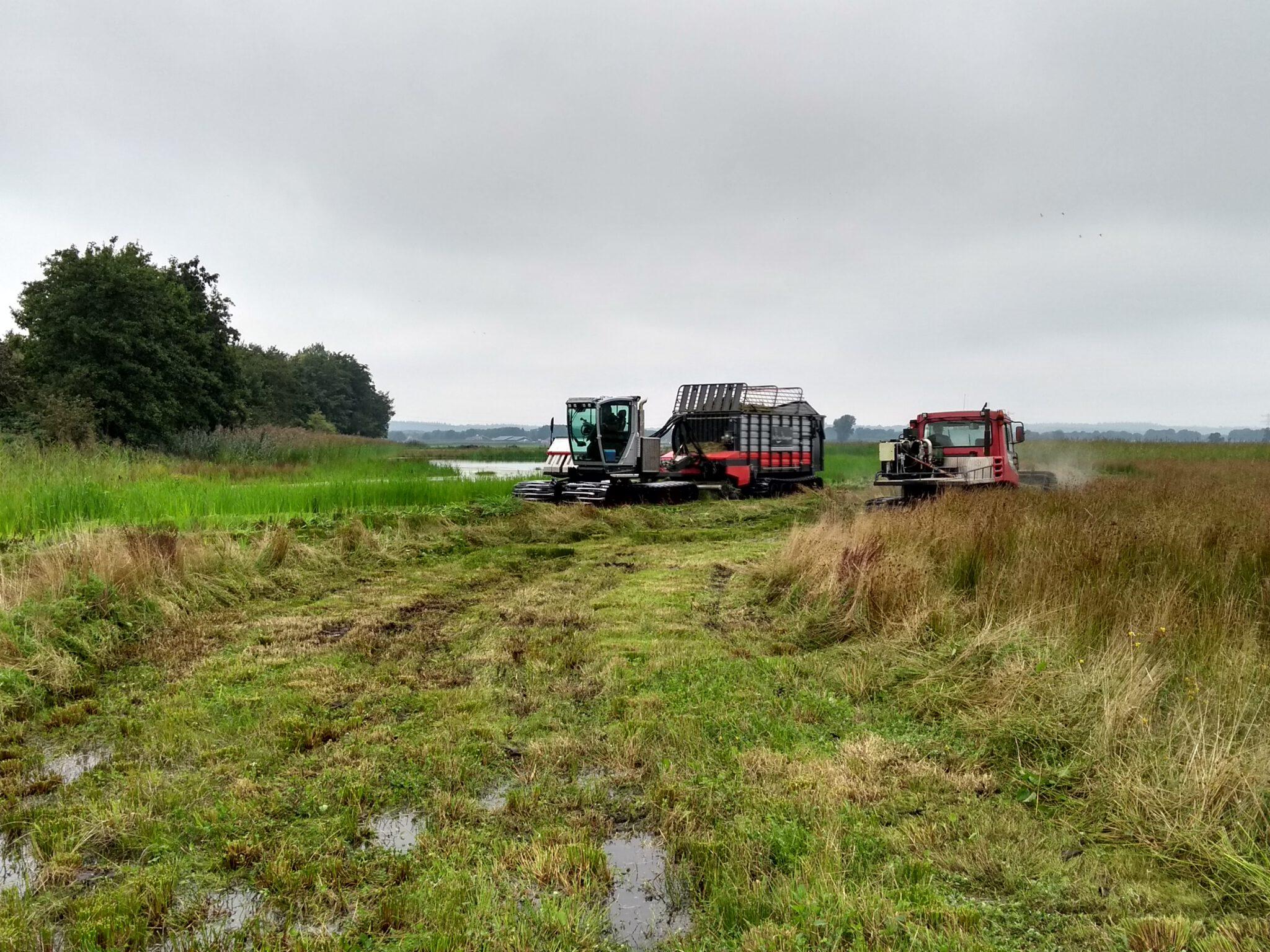 Hoe er waarom we maaien in de Binnenveldse Hooilanden