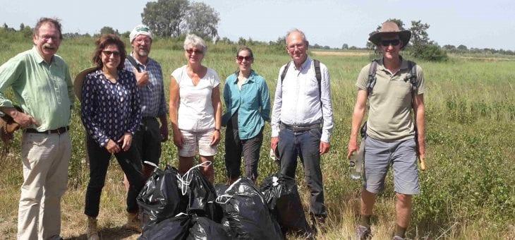 Vrijwilligers oogsten zaad moeraskartelblad