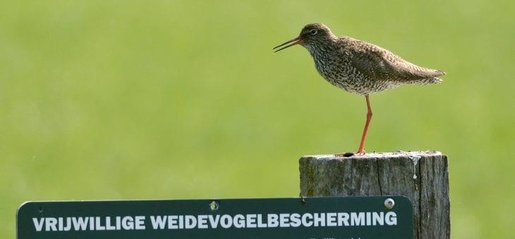 Succesvol weidevogeljaar in het Binnenveld