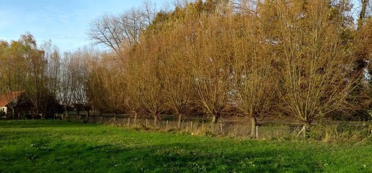 Zaterdag 9 februari: Wilgen knotten in natuurgebied De Groene Grens